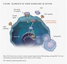 Erbitux® (cétuximab) : importance de la détermination du statut mutationnel des gènes RAS de type sauvage (exons 2, 3 et 4 des gènes KRAS et NRAS) avant d'instaurer un traitement par Erbitux – Lettre aux professionnels de santé